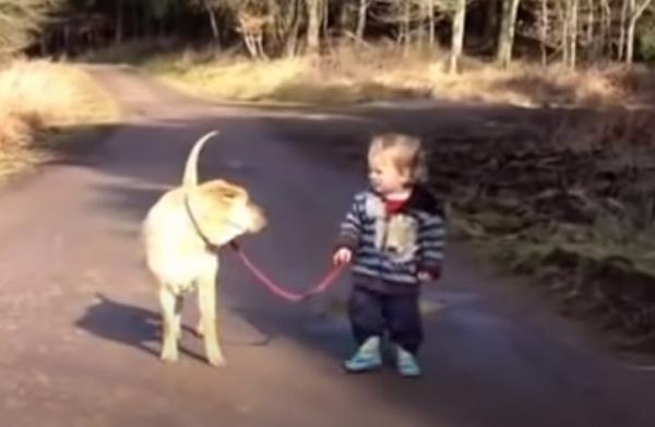 Юмор: Малыш выгуливает собаку и тут… лужа!