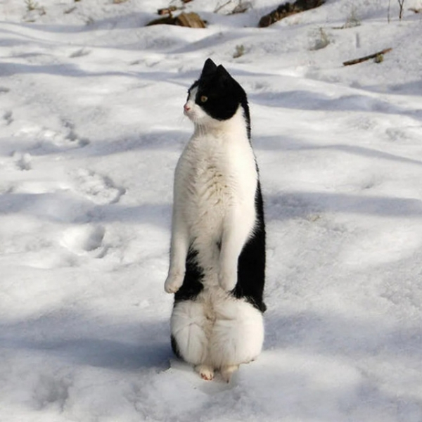 Чем не пингвинчики? (21 фото)