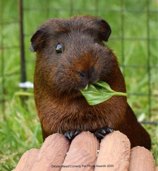 Смешные фотографии домашних животных, присланные на фотоконкурс Comedy Pet Photo Awards 2020 (29 фото)  И