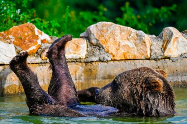 Жизнь животных на фотографиях (20 фото)