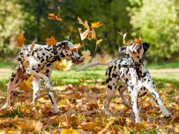 Осень-весёлое время года для собак (20 тфото)