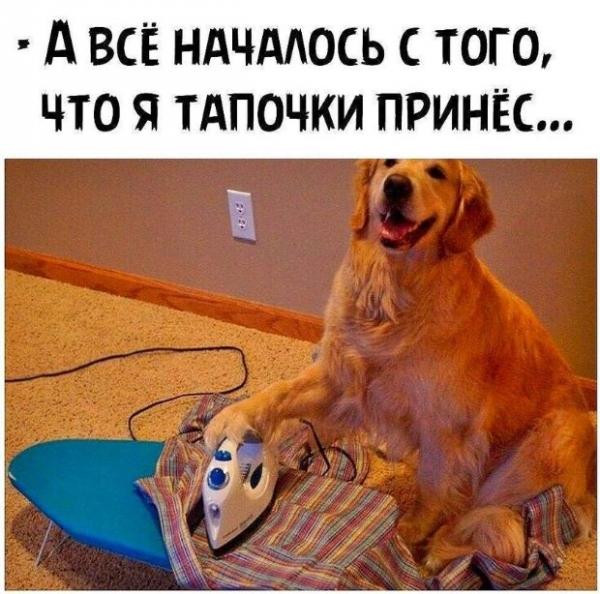 Прикольные картинки для хорошего настроения! (30 фото)