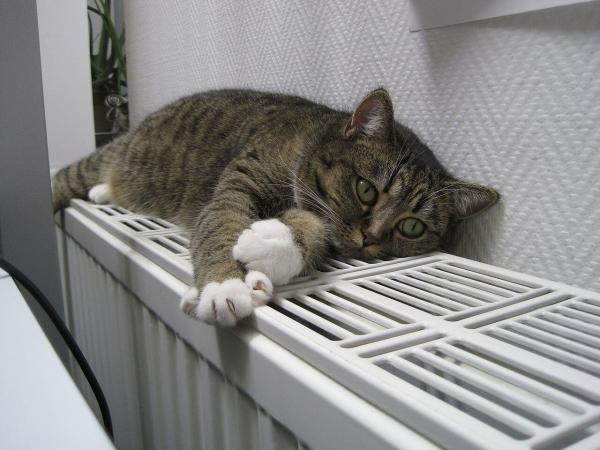 Любители тепла (20 фото)