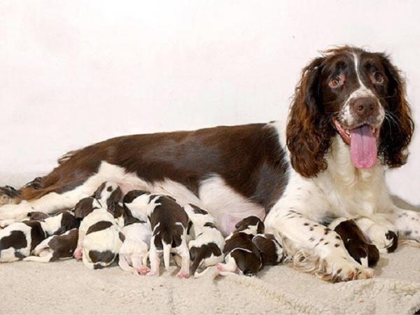 Собачьи мамы (30 фото)