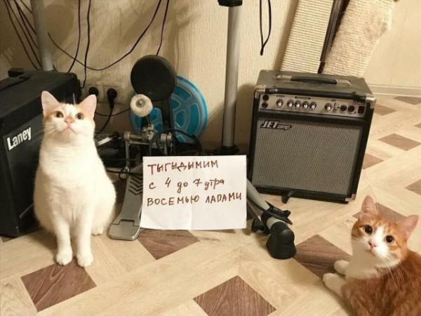 Чистосердечные признания и объяснительные нашкодивших котеек (12 фото)