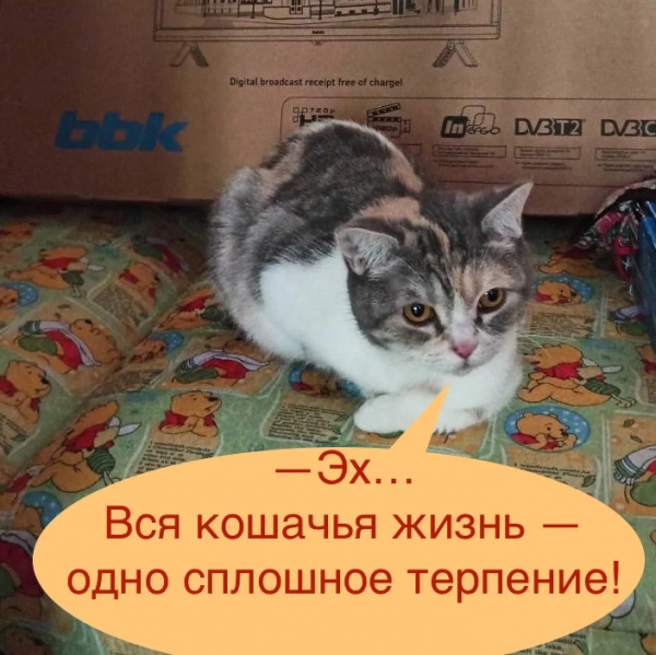 Почему кошки способны долго терпеть даже очень сильную боль (3 фото)