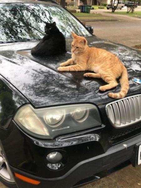 Котики, которые ответственно подходят к своей работе (15 фото)
