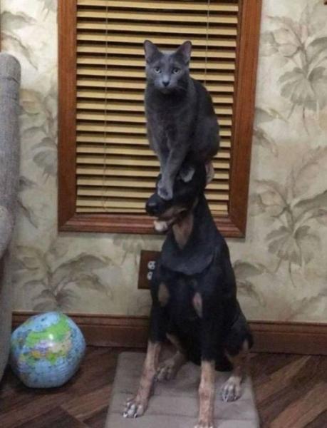 Сногсшибательно смешные коты (30 фото)