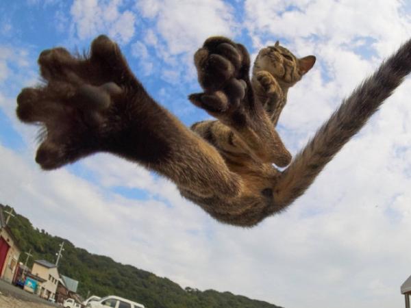 Снимки котиков-ниндзя от японца Хисаката Хироюки (21 фото)