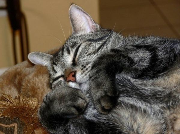 Спящие котэ (20 фото)