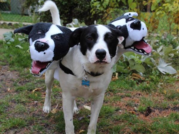 Церберы — блестящие костюмы на Хэллоуин для собак (19 фото)