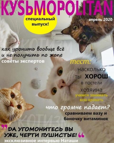 Журнал, который втайне выписывает ваш котичка (6 фото)