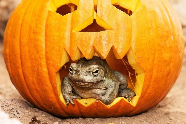 Хеллоуин у животных (30 фото)