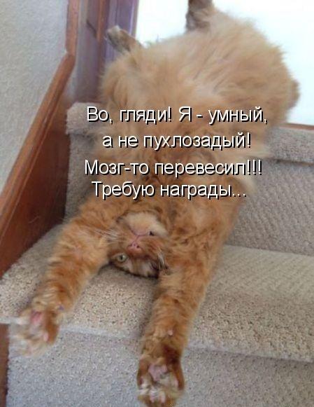 Котоматрица на радость! (30 фото)