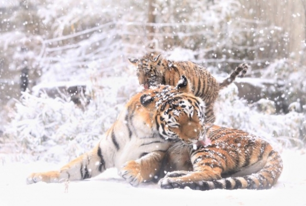 Когда мама рядом, всё прекрасно! (25 фото)