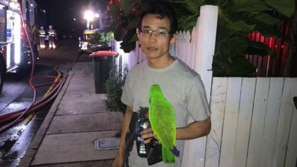 Домашний попугай спас хозяина во время пожара