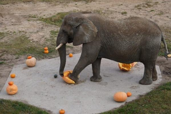 Фото дня: Милый слоник