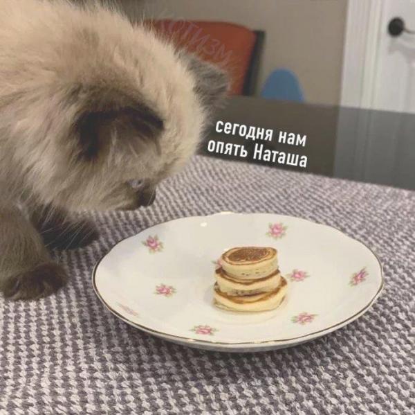 Завтрак для котэ (4 фото)