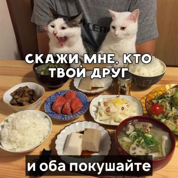 Котячий фольклор в прикольных картинках (6 фото)