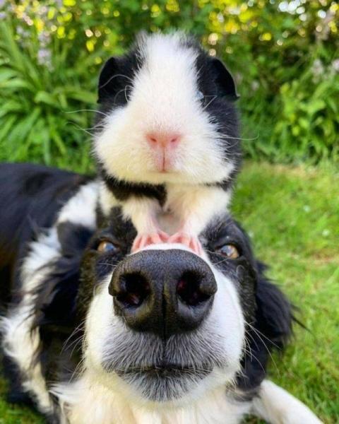 Фотографии с животными, которые подарят улыбку и хорошее настроение (27 фото)