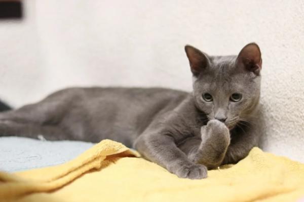 Тссс! Кошки нас слушают