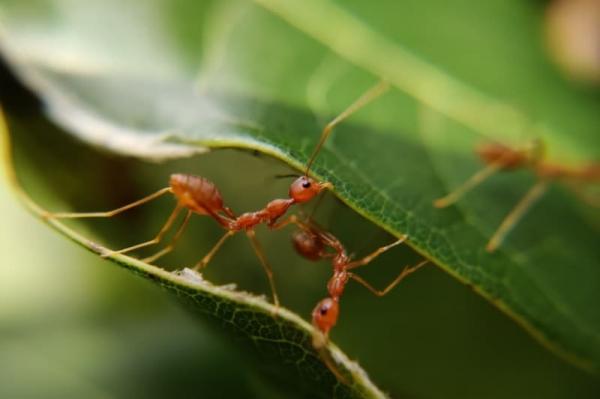 7 удивительных фактов о муравьях