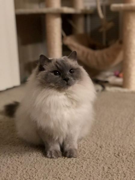 Няшные пушистые котики (25 фото)