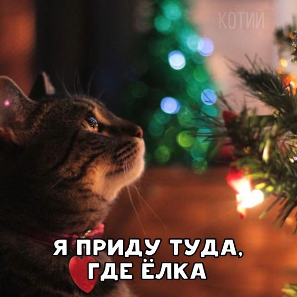 Предновогоднее желание котика (8 фото)