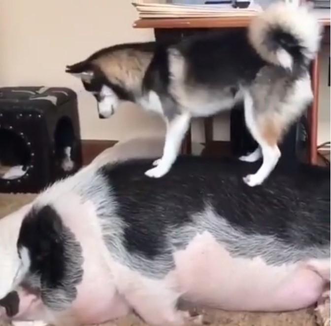Забавное видео: Когда твой друг постоянно спит, а тебе скучно