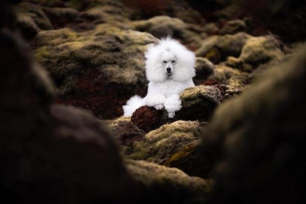 Фотографии собак на фоне живописных пейзажей (13 фото)