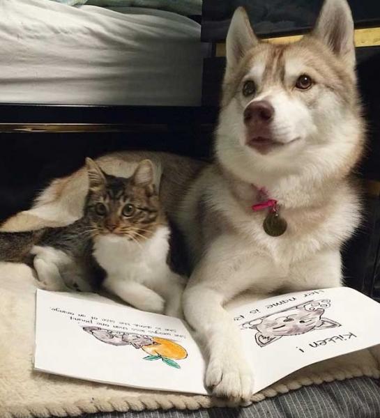 Юмор: Дружба между котом и хаски
