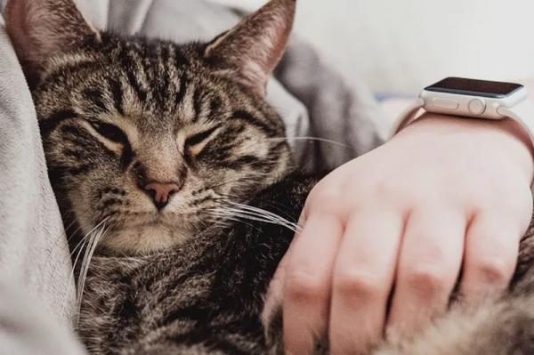 Почему коты любят спать на человеке