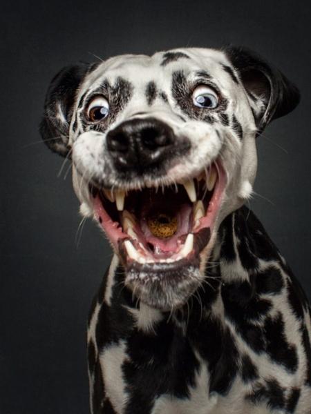 Эти радостные животные сделают ваш день классным! (30 фото)