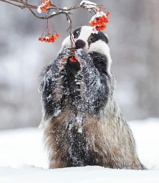 Фото дня: Чудесный зимний кадр!
