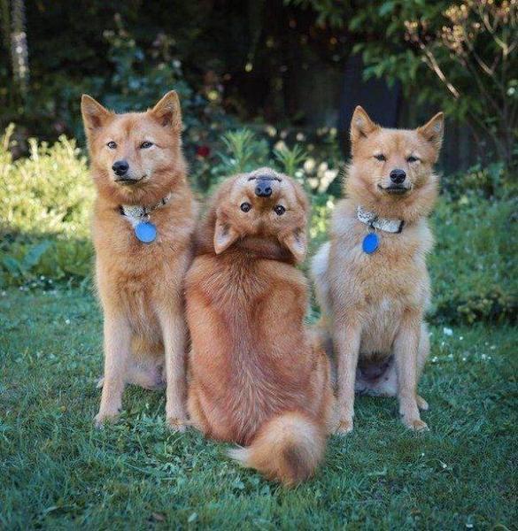Забавные животные, которые вызовут у вас улыбку (30 фото)