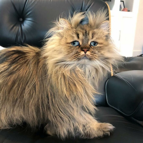Знакомьтесь, кот-понедельник! (26 фото)