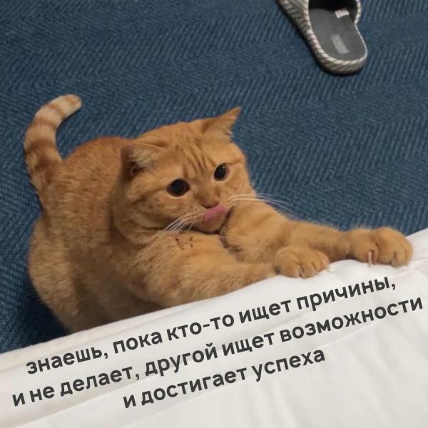Мотивация от котика (5 фото)