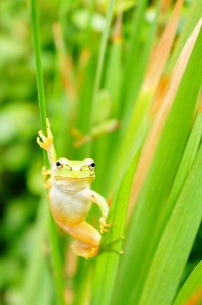 Лягушки бывают разные (7 фото)