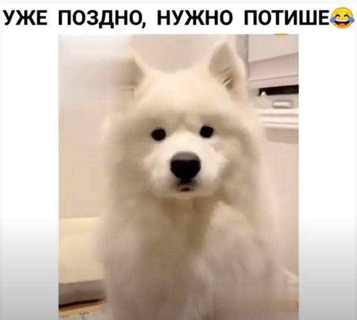 Юмор: Очень совестливый пёс