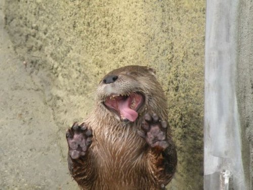 Забавные животные, которые поднимут вам настроение (30 фото)