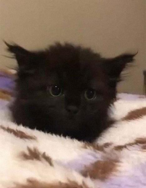 Пост абсолютной мимишности и умиления: Котики всегда в тренде! (30 фото)