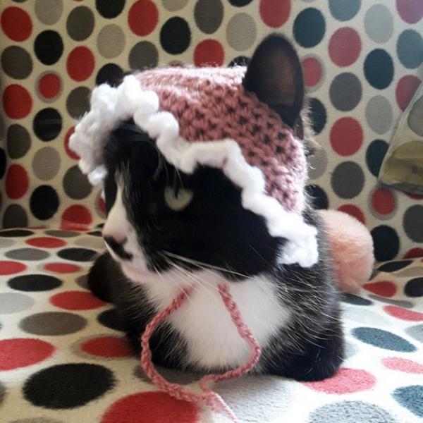 Котейки в чепчиках (21 фото)