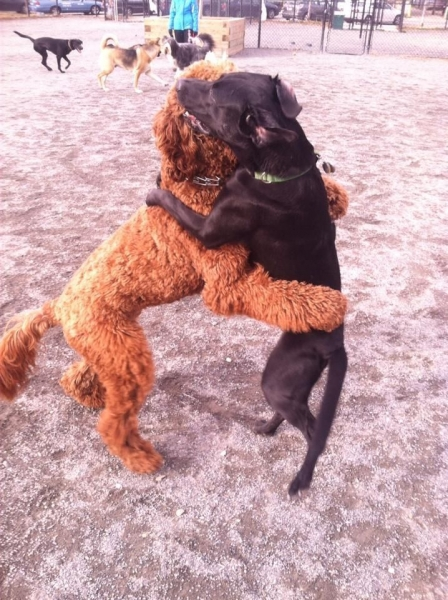 Смешные и милые собаки (30 фото)