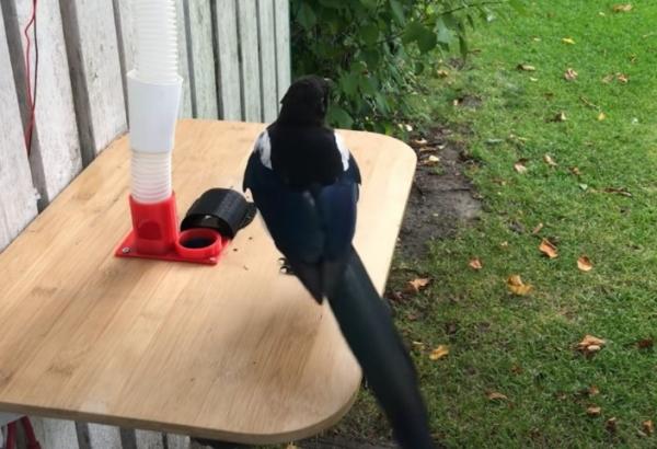 Швед научил птиц собирать мусор за еду