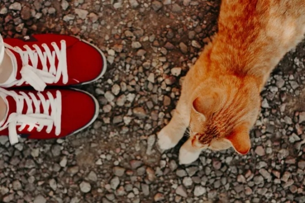 : В США найден «самый удивленный кот» — от его взгляда всем как-то неловко (4 фото)