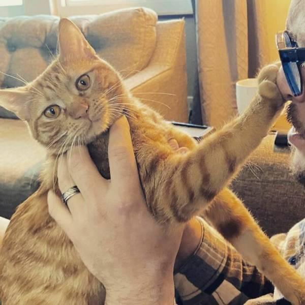 Сегодня никакой кошачьей нежности (16 фото)
