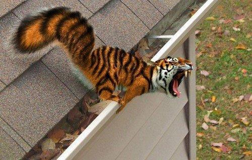 Сумасшедший фотошоп с животными (25 фото)