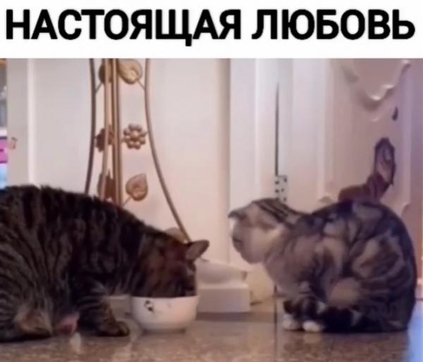 Забавное видео: Для тебя ничего не жалко