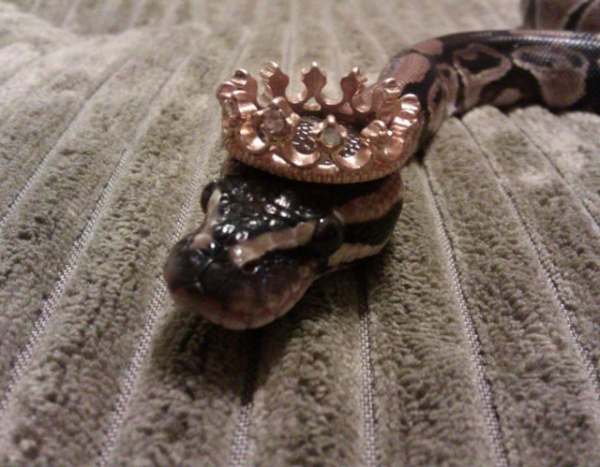 А вы знали,что змеи в головных уборах такие очаровашки! (30 фото)