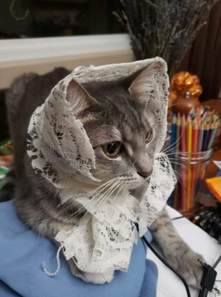 Симпатичные кошки-бабушки (25 фото)